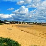 Elie Beach Summer Dog Walking
