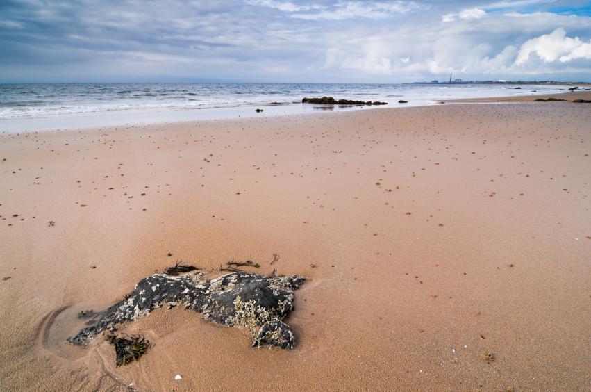 Beach Shell Bay